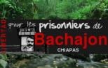 bachajonres2